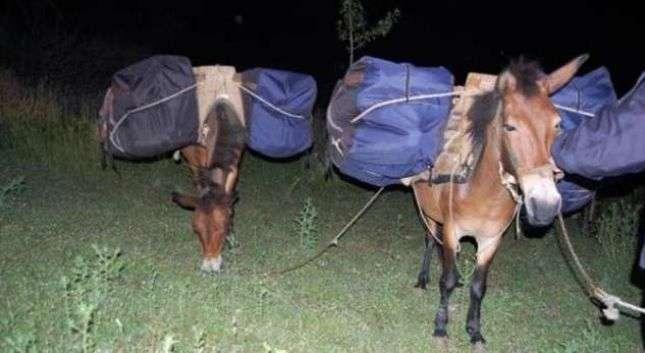 transportonin-300-kg-hashash-me-mushka